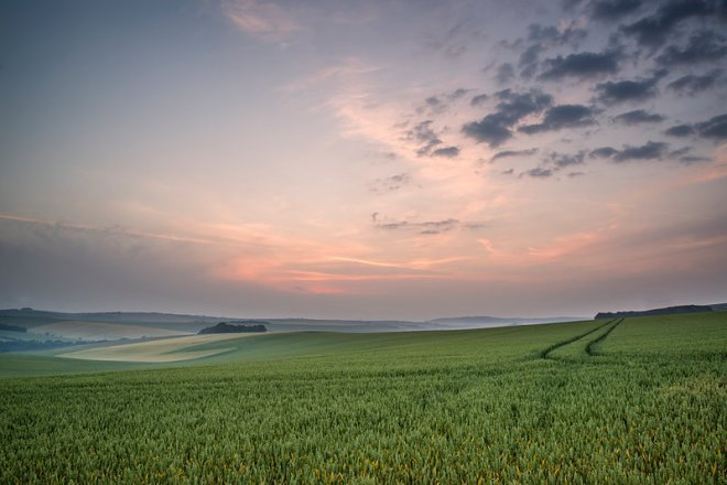 Summer sunrise over landscape of fresh wheat field